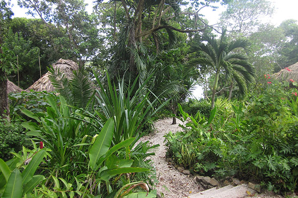 Pathways on the grounds at Lamanai Outpost Lodge